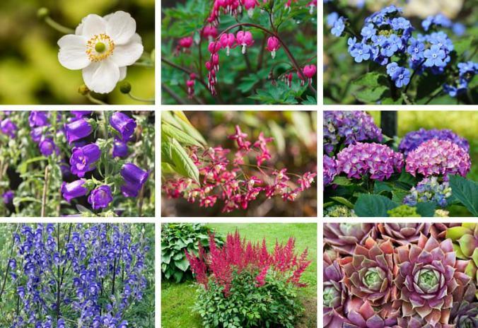 Perennials-that-love-shade